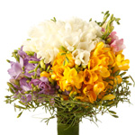 Multicolor Freesias Bouquet